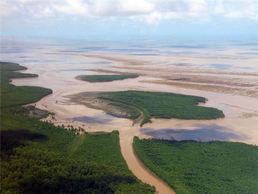 © IRD / C. Proisy : Manglar en Guyana, en el litoral atlántico: la costa cenagosa más larga entre el Amazonas y el Orinoco.