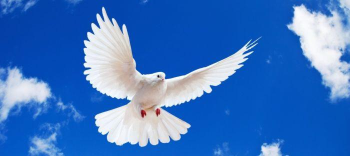 paloma-blanca-volando-6085