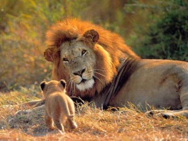 matan-cecil-leon