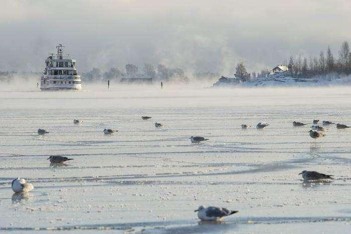 Gaviotas posadas sobre el hielo mientras el ferri Suomenlinna se aproxima al Puerto Sur en Helsinki (Finlandia), el 6 de enero de 2017. Las temperaturas en Helsinki alcanzaron los 18 grados bajo cero. Foto: Markku Ojala EFE.