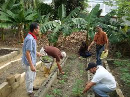 Ministerio de Ecosocialismo asignó Bs. 1 millardo para proyecto de viveros que no arrancó