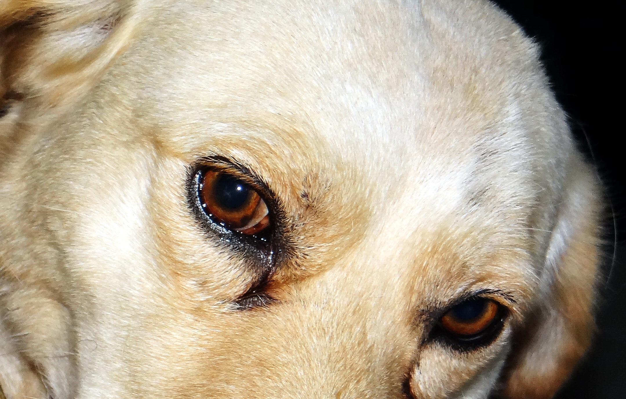 Ojitos de perros