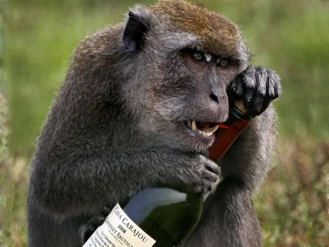 Alcohol y evolución