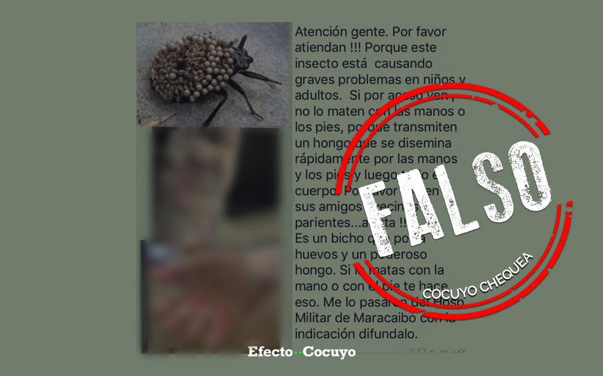 ¿Hay un insecto que está infectando manos y pies con hongos?
