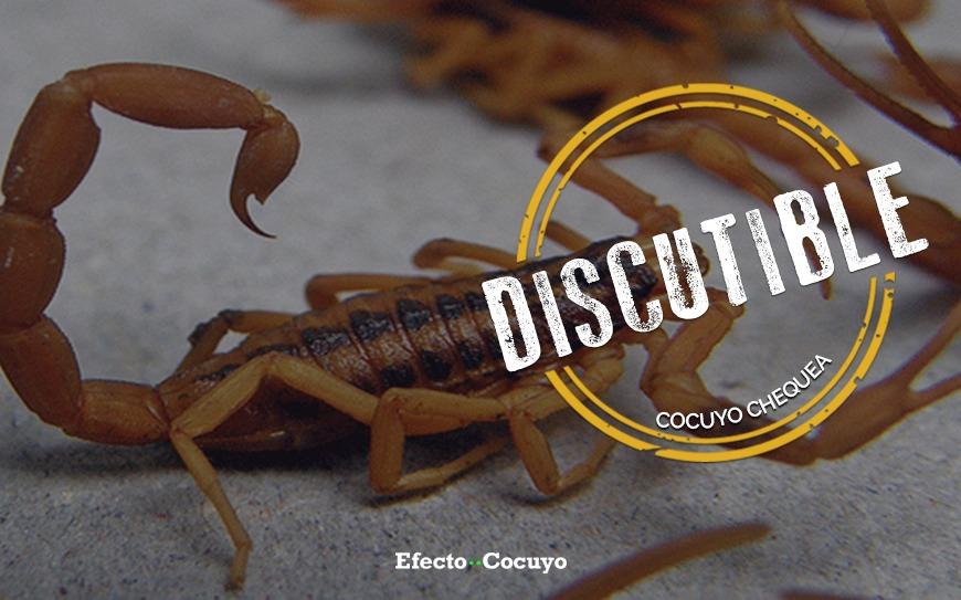 escorpión isabel ceciliae
