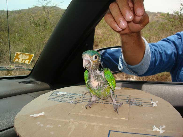 fauna silvestre tráfico