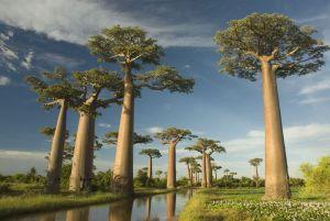 Los árboles